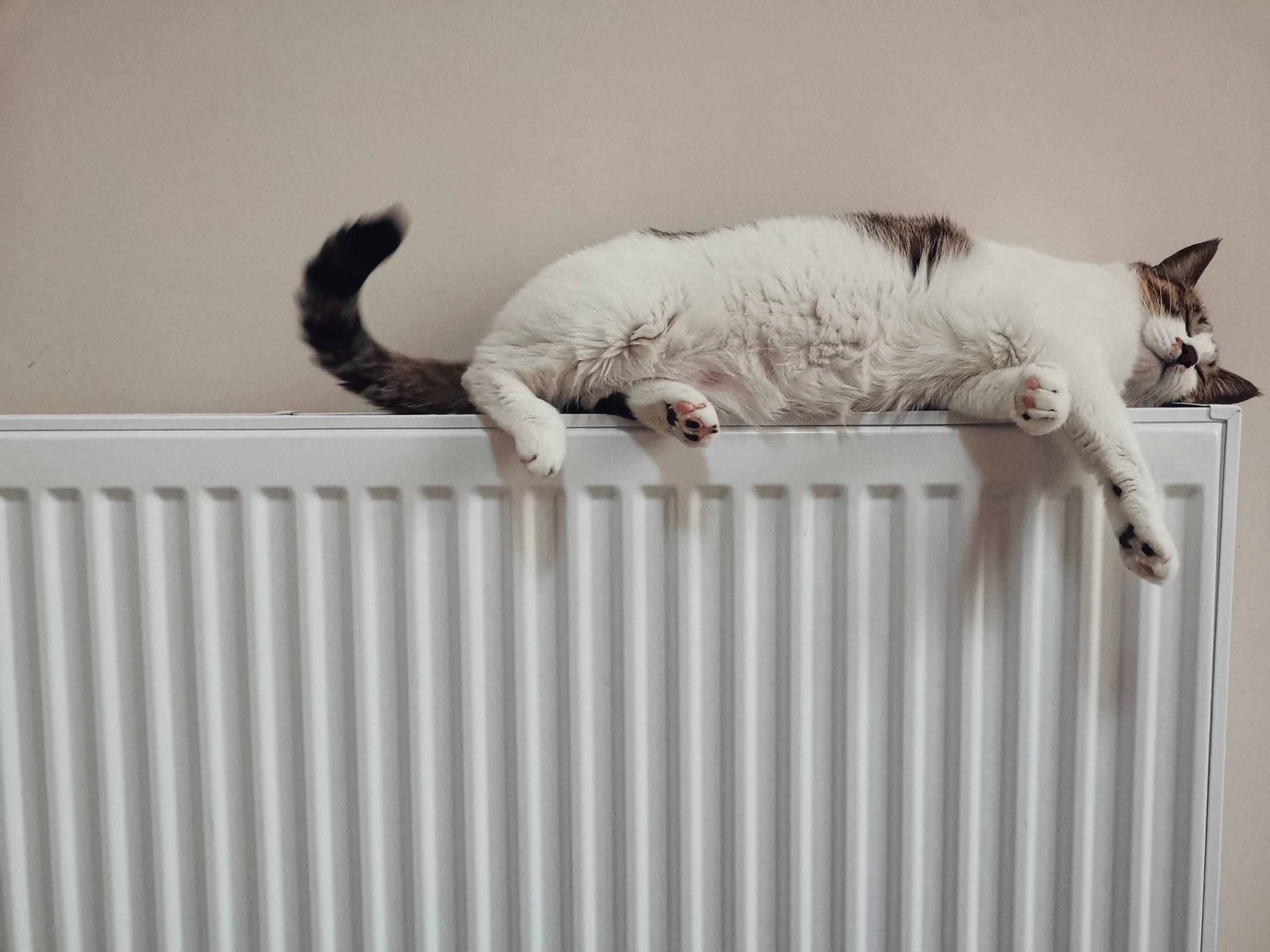 gato sobre calefactor